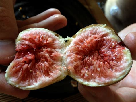 fruit in japanese guide to buying inexpensive fruit in japan the lazy