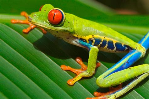 una rana a frog diferencias entre sapo y rana diferenciasentre