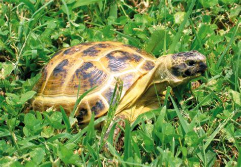 tartarughe in giardino tartarughe in giardino d inverno il letargo della