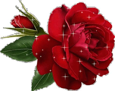 imagenes de rosas rojas animadas imagenes de rosas sangrientas rosa spina foto e vettori