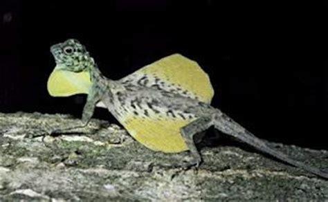 serpente volante rettili volanti paperblog