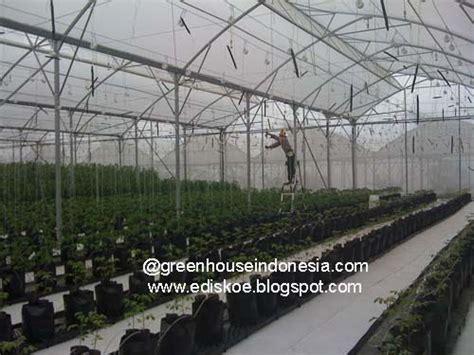 membuat greenhouse untuk hidroponik hidroponik to town let s go hydroponics indonesia