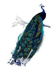 Fairy Garden Art - vintage clip art natural history stunning peacock the graphics fairy