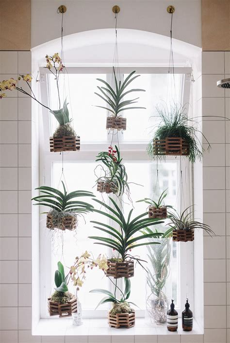 Window Plant Hanger - home hanging plants in window fvf apartment