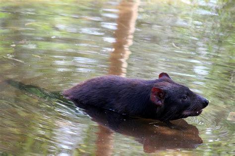 healesville australian wildlife  healesville sanctuary