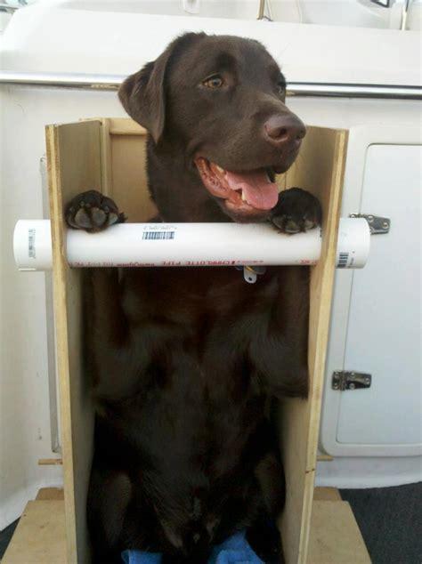 bailey chair for dogs canine megaesophagus portable bailey chair for travel