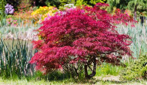 Boom Kleine Tuin by Bomen In De Tuin Tuinseizoen