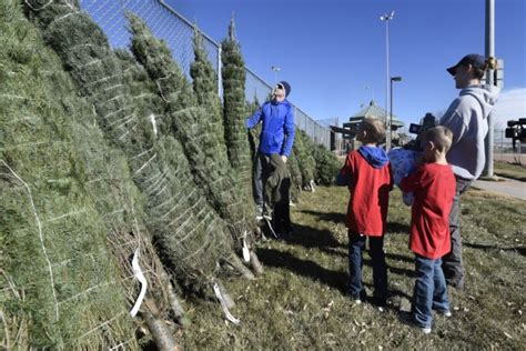 trees for troops gives christmas trees to soldiers