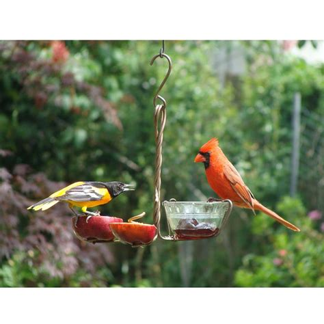 17 best images about bird feeding on pinterest national