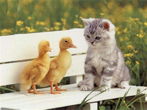Flowers Mentor Ohio - fotos de gatos fotografias de gatitos fotos de gatitos fotos de gatos persas wallpapers de