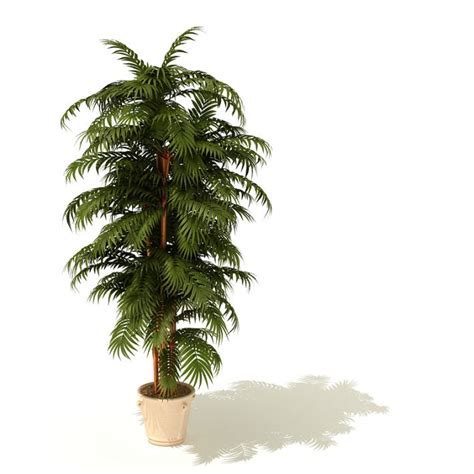 potted tropical plants plant tropical potted 3d model cgtrader