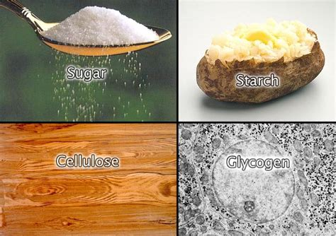 carbohydrates organic compound building organic compounds