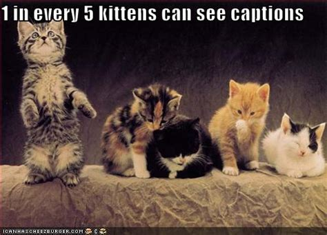 kitten pictures with captions animals pictures kitten pictures with