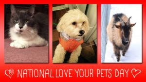 national love  pet day american grit