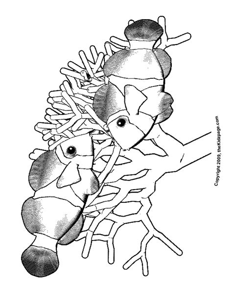 coloring page of a clown fish fish images free cliparts co