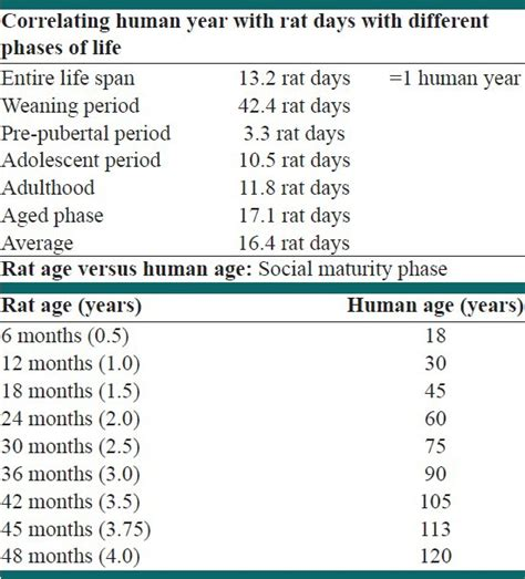 span in human years rat s age in human years scientific diagram