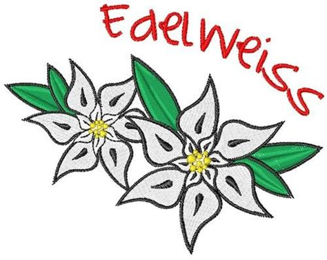 edelweiss clipart cliparts co