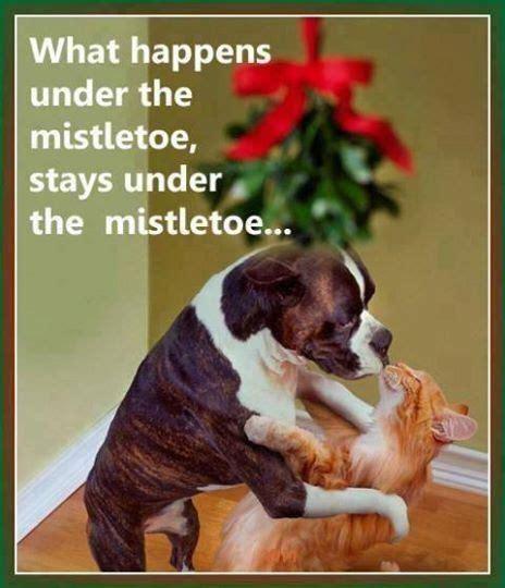 mistletoe pictures   images  facebook tumblr pinterest  twitter