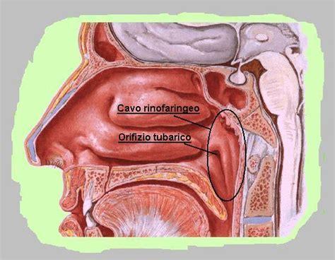 adenoidi e alimentazione dott alberto tonsille adenoidi