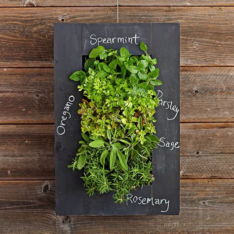 Wall Mounted Herb Planter by Chalkboard Wall Planter Eclectic Indoor Pots And