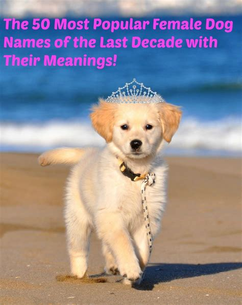 popular names for dogs 25 best ideas about names on names puppy names and