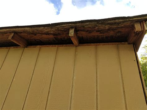 Shed Sealant by Sealant Shed With Gaps At The Top Wasp Nest Come Back