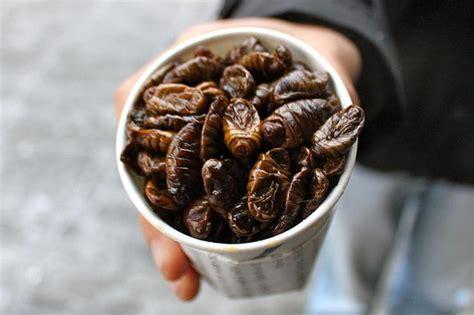 alimentazione mondiale il futuro dell alimentazione mondiale gli insetti