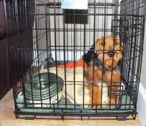puppy hates crate what to do when your hates his crate five things to do when your refuses to