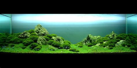 aquascape design australia aqua design amano google search aquariums pinterest