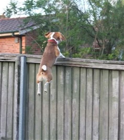 how to keep dog from jumping fence how to keep dog from jumping fence how to stop a dog from