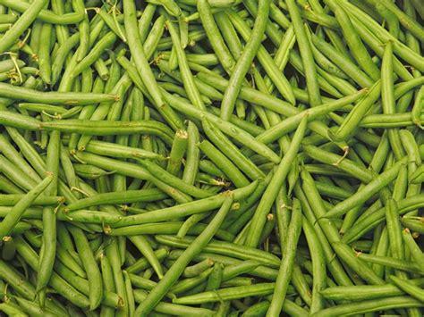 Ijoijoan Saladova Bean Vegs Salad Size Medium veg out featuring green beans the buzz magazines