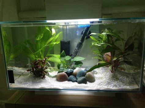 betta tank how do i set up the perfect betta tank my aquarium club