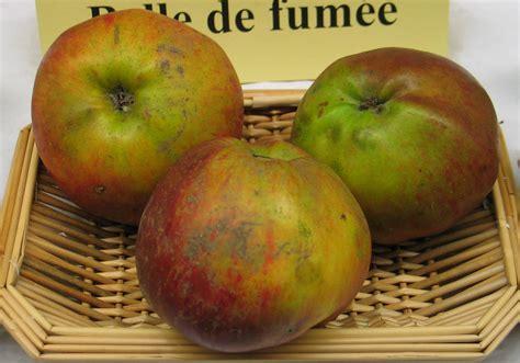 pomme haute de pommes 224 couteau de akane 224 haute bont 233 tox 233 association les mordus de la pomme
