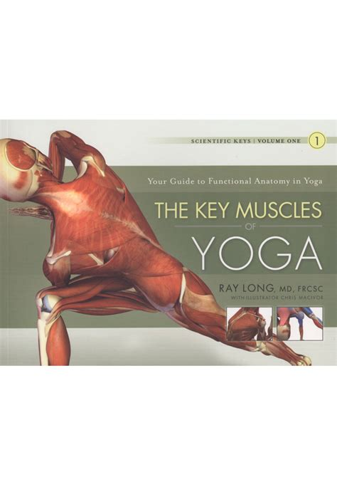 key muscles of yoga 1607432382 the key muscles of yoga scientific keys pdf sport fatare