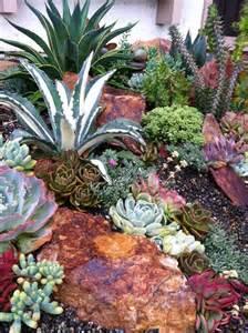 best 25 outdoor cactus garden ideas on pinterest cactus garden ideas succulents garden and