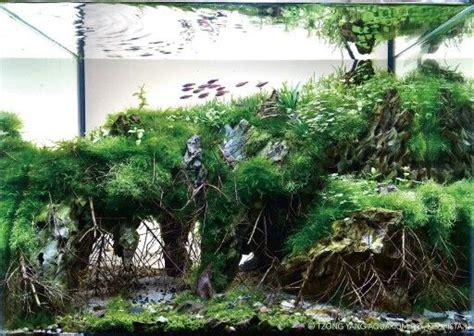 pin  david wegner  aquarium aquascape planted