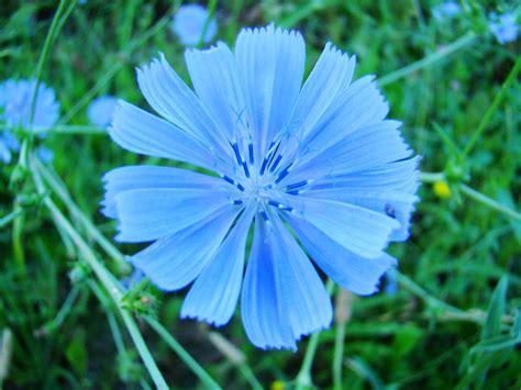 fiori di bach australiani floriterapia