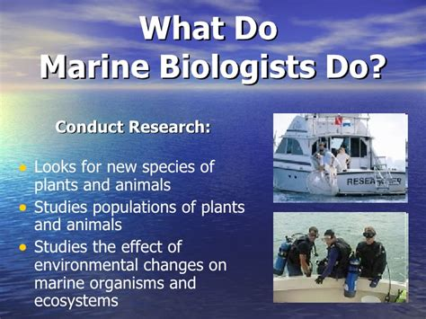 Marine Biologist Earnings by Pics For Gt Marine Biologist Salary