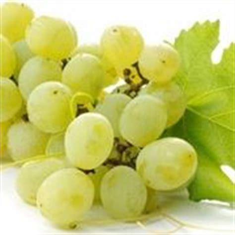 piantare uva da tavola piantare uva uva come piantare l uva