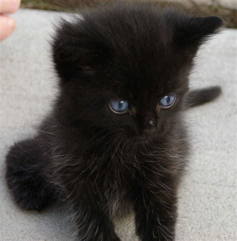 black kitten weirdauntmartha flickr