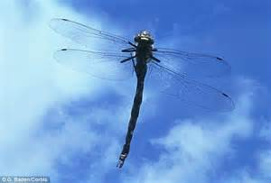 Jufm20 Bodysuit Movement Blue Animal dragonflies see in ultrahd study claims daily mail
