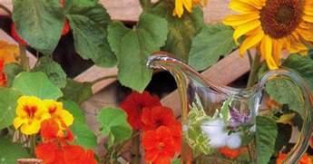 fiori commestibili ricette fiori commestibili scopriamo le ricette pi 249 originali e