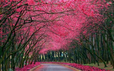 imagenes increibles con photoshop paisajes espectaculares para fondos de pantalla
