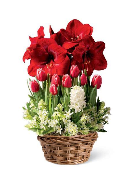 Gardeners Supply Amaryllis 29 Best Centerpiece Images On Centerpiece