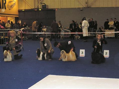 kung fu shih tzu ch asian kung fu kakou de neguyland chien de race toutes races en tous departements
