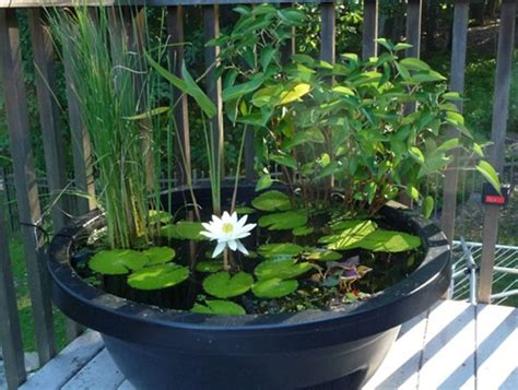 small container water garden small ponds