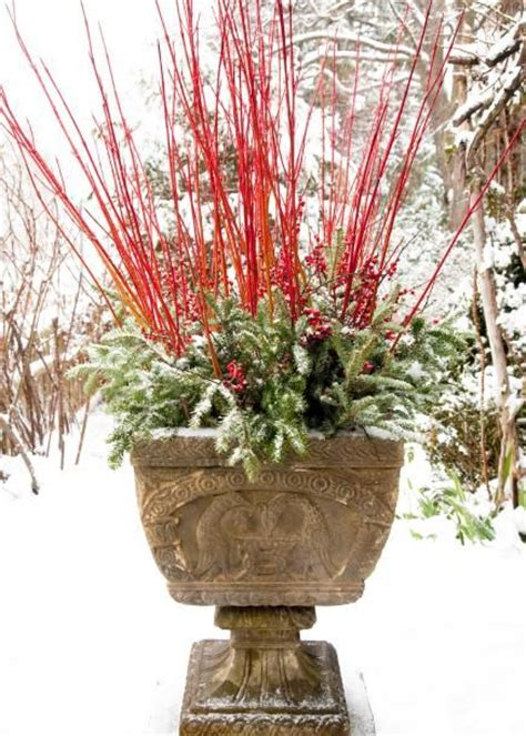 Winter Container Garden - gardens planters and spikes on