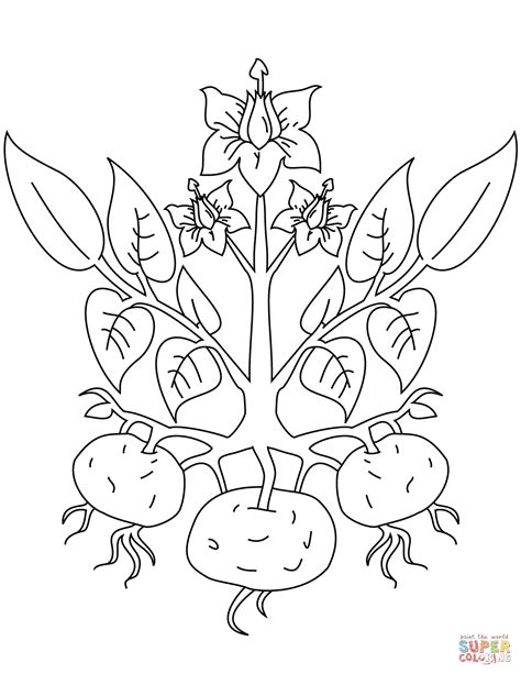 plant coloring pages potato plant coloring page free printable coloring pages