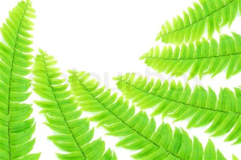 what is the scientific name for a what is the scientific name for fern f f info 2016