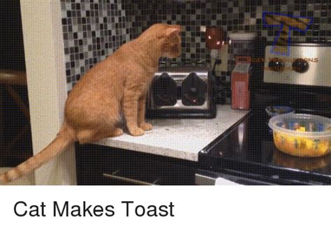Cat Toast Meme - cat makes toast toast meme on sizzle